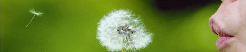 Mindfulness bij Molius Personal Coaching