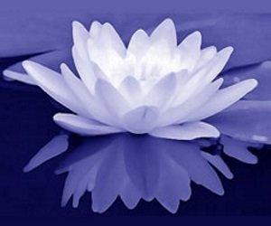 Mindfulness goed voor rust en vrijheid